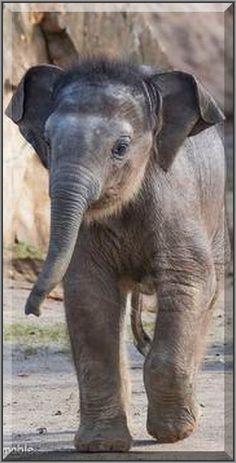cute elephant baby  #photo by  kkfilmable