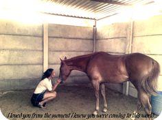 La comunicación entre amazona y cabalgadura existe... no es tangible, es química.