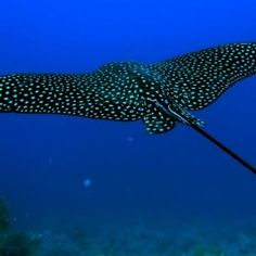 Fifty-Two Beautiful Ocean Animals That You Can See when You Scuba Dive