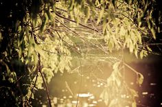 A delicate web, suspended in the sunlight.