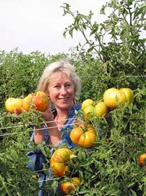 Growing Organic Tomatoes & Tomato Health Facts