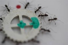 Hard Labor: Study Deciphers How Ants Cooperate to Carry Heavy Loads