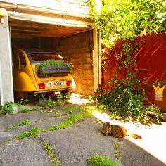 a cool car and a cute cat in tønsberg town