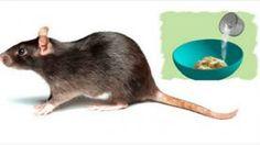 Ces 3 astuces naturelles vous débarrasseront des rats et des souris pour de bon !