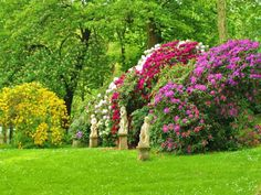 Krása magnolie či rododendronů vás bude dojímat každý den. Oživte svoji zahradu okrasnými keři.