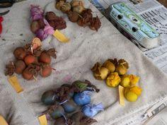Sørg naturlige farvestoffer til dit påskeæg fra din have foder og edibles: The Pecks | OregonLive.com