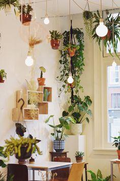 Urban jungle café