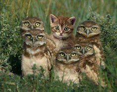 Cat with owls...funny