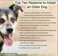Adopt a senior dog