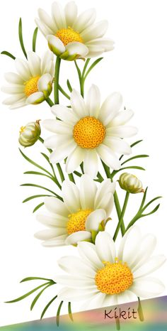 flowers Fauna and Flora are two terms frequently heard by those that spend time in nature. Beautiful Flower Drawings, Amazing Flowers, Watercolor Flowers, Watercolor Art, Sunflower Wallpaper, Flower Phone Wallpaper, Decoupage Vintage, Flower Pictures, Flower Png Images