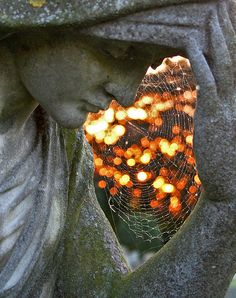 Spiderweb and bokeh make a human heart cradled by the statue. Lovely photograph.