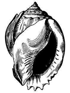 Antique Shell Drawing – Click for full page printable  @  Vintage Fangirl