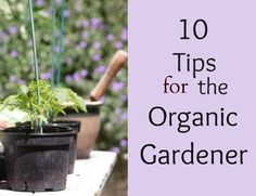 10 Tips to become a Successful Organic Gardener #organicgardening - Flour On My Face