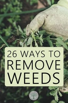 Weeds can be a HUGE problem, but we found over two dozen ways to remove them , and most of them are natural! Liquid Fertilizer, Organic Fertilizer, Organic Gardening, Gardening Tips, Weeding Tips, Planting Vegetables, Vegetable Gardening, Veggies, Weed Types