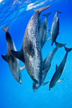 Dolphins Dance Troupe (The Ocean is Vast and Endless, in it, holds Amazing creatures........some we are aware of and some we have Yet, to still find.....)  - Stop the Dolphin and Orca Slaughter NOW