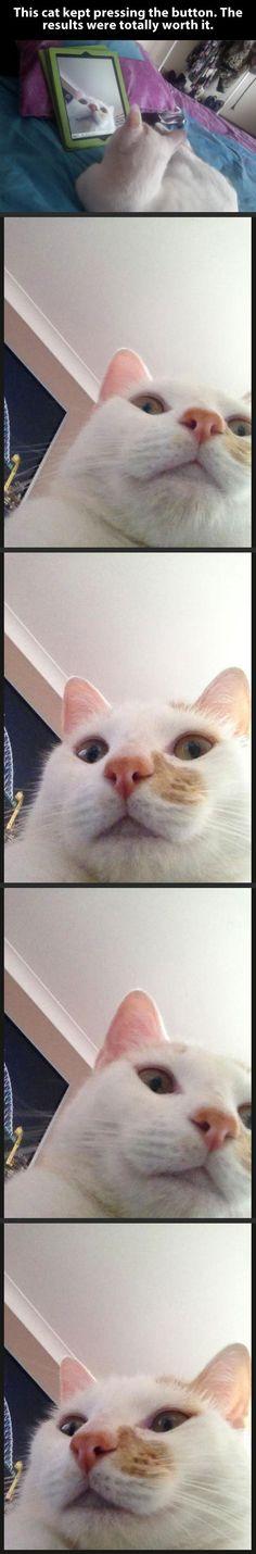 Cat pressing the button…#selfie