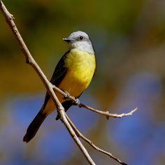 Brazilian Bird Visit Brazil, Bird Watching, Bird Feathers, Beautiful Birds, Reptiles, Animal Pictures, Around The Worlds, Tropical, Nature