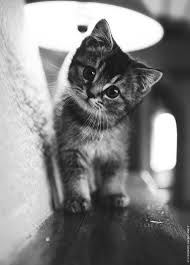 Legendary The cutest baby animals: pictures of kittens, dogs, elephants and other pets . - Legendary The cutest baby animals: pictures of kittens, dogs, elephants and other pets … - Baby Animals Pictures, Cute Baby Animals, Funny Animals, Funny Cats, Animals Kissing, Animals Sea, Animals Images, Pretty Cats, Beautiful Cats