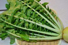 大根が旬を迎えました。 これから春先まで大根が市場に出回りますが、時に葉付きの大根を手に入れる事も多いと思います。 無農薬野菜のマルシェで大根を購入したとき、家庭菜園などされている方など、大根の葉を活用したいと思ったことありませんか?  栄養が豊富で体によい、ということは耳にするけれど 刻んでお味噌汁の具にする位しか思い浮かばない・・・ なんて方に是非おススメしたい大根の葉を活用した10分でできる常備菜レシピをご紹介します。 捨てないで!大根の葉は緑黄色野菜。 根よりも栄養が豊富  大根の葉は緑黄色野菜だとご存じでしたか? 「大根どきの医者いらず」ということわざがあります。 大根は消化酵素が豊富で、胃やお腹の調子をととのえることから、冬場の旬に食べるとよい、という意味が込められています。 大根の葉は、βカロテン、ビタミンC、ビタミンK、葉酸などのビタミン、カリウム、カルシウムなどのミネラルと多くの栄養素が含まれています。 中でもビタミンCや鉄分、カルシウムなど、女性に必要な栄養素は豊富に含まれ、 これらは同じようにほうれん草にも含まれていますが、ほうれん草と比較しても…