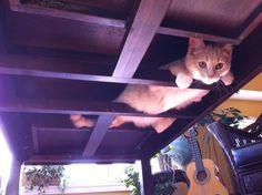 なんでそんなところに!?と猫の行動に驚かされることって多いですよね。小さなスペースにうまーく入り込む性質のあるにゃんこですが、テーブルの裏でくつろぐ姿が斬新だとネットで話題になっています。狭い木と木の隙間をうまくくぐり抜て入ったのでしょうか。その姿を思うと可愛