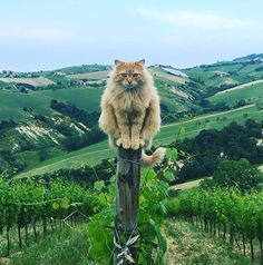We provide Thousands of cute animal pictures, gifs, videos on demand! Also great article on how to be dogs, cats & birds owner. Funny Cats, Funny Animals, Cute Animals, Crazy Cat Lady, Crazy Cats, I Love Cats, Cool Cats, Beautiful Cats, Animals Beautiful