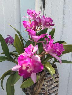 Beautiful brillant color orchid