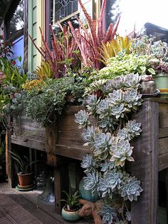 This inc redibly chee rful , textural and diverse deck top planter box belongs to the treasurer of the Bromeliad Society of San Francisco...
