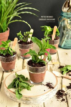 No-Bake Potted Choco