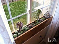 Ideia para plantas de interior