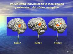 Neurociencia y Educacion #neurociencia #educación