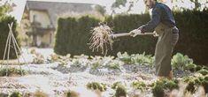 veggie-garden-mulch Garden Mulch, Garden Beds, Wood Chip Mulch, Types Of Mulch, Rubber Mulch, Organic Mulch, Weed Seeds, Landscape Fabric