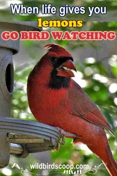 When things are down and your life is troubled, go bird watching! A peaceful, rejuvenating way to feel better and get a positive look on life. Bird Feeders, Bird Nests, Bird Feeding Station, Viewing Wildlife, Great Hobbies, All Birds, Backyard Birds, Outdoor Art, Bird Watching