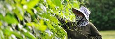 Pura Organic Foods, Thailand | Thailand Phuket Healthy Organic Food, Juice, Detox, Weightloss