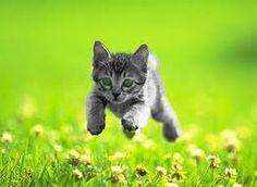 Google Afbeeldingen resultaat voor http://www.dierenkliniekhoofdweg.nl/dkhnieuw/wp-content/uploads/2011/08/BW-kitten.jpg