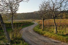 Der Weg - Herbst im Weinberg