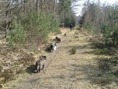 the dogs love our woods