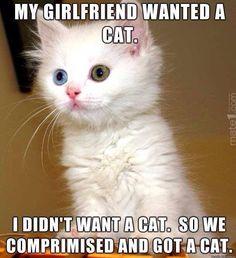Cat Comprimise