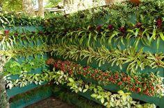 jardim e horta