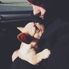.@thelifeof_hank | dad you've got some gold in there #frenchbulldog #frenchie | Webstagram
