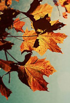 HAPPY AUTUMN! → For more, please visit me at: www.facebook.com/jolly.ollie.77
