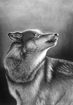 Jasmin Ekström      Wolf drawing