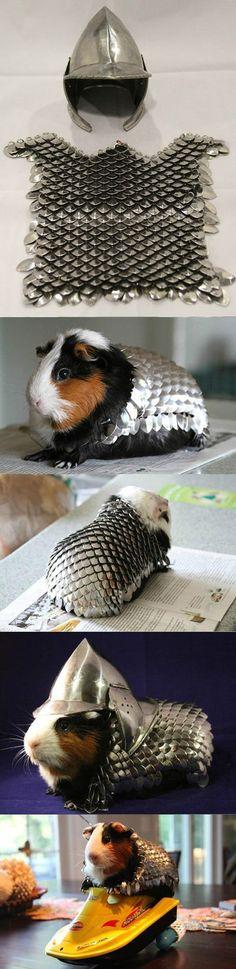 Prepare Your Guinea Pig For Battle