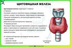Back To School Organization Highschool, Anatomy And Physiology, Human Body, Biology, Health And Beauty, High School, Medicine, Science, Grammar School