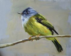 Canary Flycatcher  Original oil painting  8 x 10 by FinchArts,