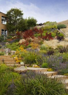 Vote for the Best Professional Landscape Project in the Gardenista Considered Design Awards Tiburon Hillside - contemporary - landscape - san francisco - Arterra LLP Landscape Architects Landscaping With Rocks, Backyard Landscaping, Landscaping Ideas, Steep Hillside Landscaping, Hydrangea Landscaping, Luxury Landscaping, Landscaping Software, Backyard Ideas, Sloped Backyard