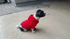 Ready for winter weather with his new sweatshirt