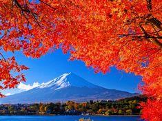 富士山と紅葉(河口湖)