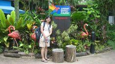 Sea Aquarium, Singapore, Bird, Birds