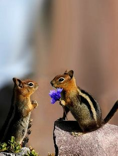 "rosiesdreams: """"Will you marry me ? Cute Creatures, Beautiful Creatures, Animals Beautiful, Cute Funny Animals, Cute Baby Animals, Nature Animals, Animals And Pets, Cute Squirrel, Squirrels"