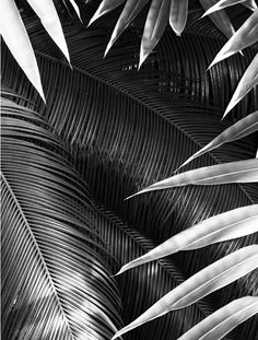 Plant patterns making us dream of tropical islands. [via Pinterest]